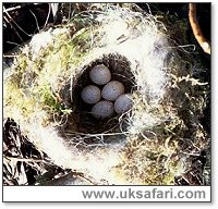 Blue Tit Nest - Photo � Copyright 2001 Gary Bradley