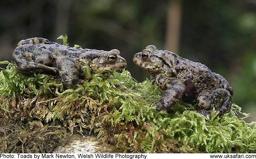 Toads by Mark Newton