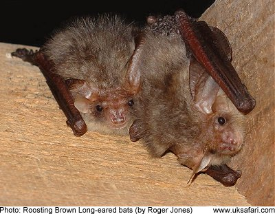 Bat Guano Remediation From The Attic Droppings Clean Up Restoration Services