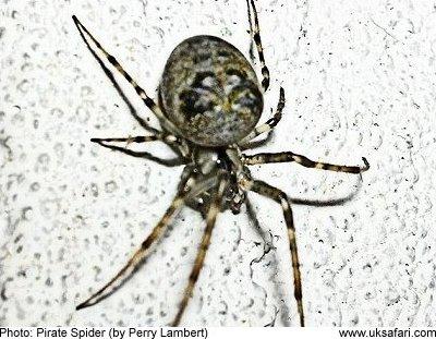 Garden Spider Uk Identification Fasci Garden